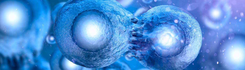 Zellenembryo